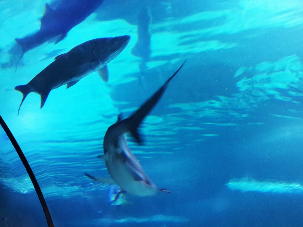 Ankara Turkey–Aquarium & Natural History Museum - Luxury ...